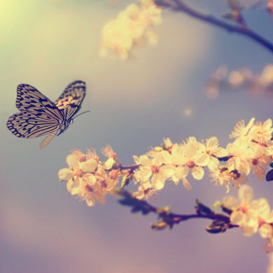 butterfly-img
